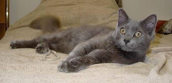 Как понять, что у кошки течка: признаки начала и окончания