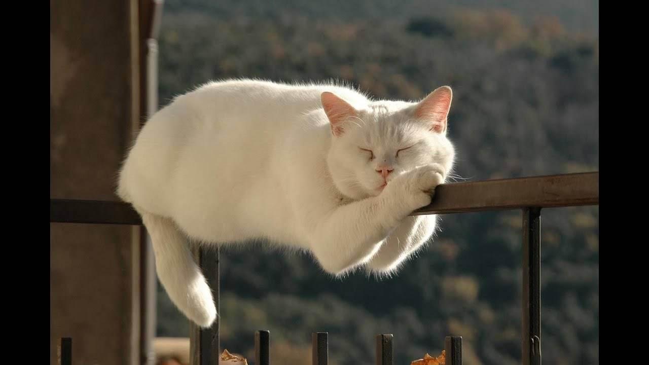 Кошка, как лекарство от коварных болезней