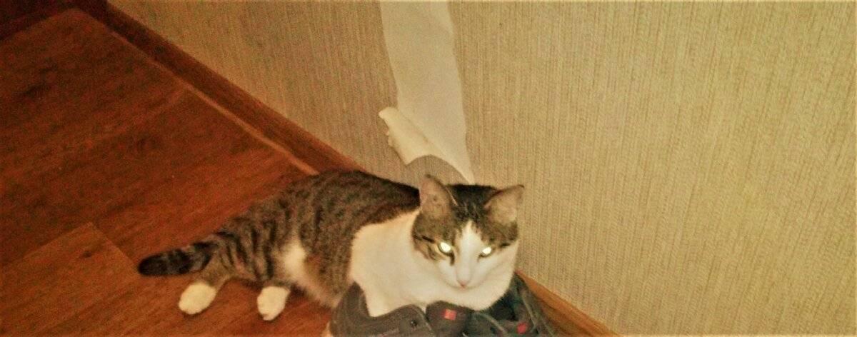 Можно ли отучить кошку драть стены? советы опытных кошатников