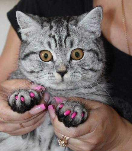 Силиконовые накладки на когти для кошек | отзывы, цена, какие лучше купить