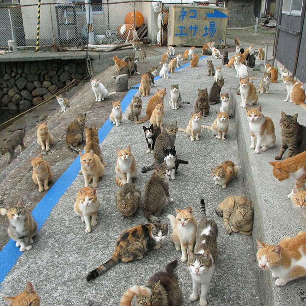 Кошки: несколько интересных фактов
