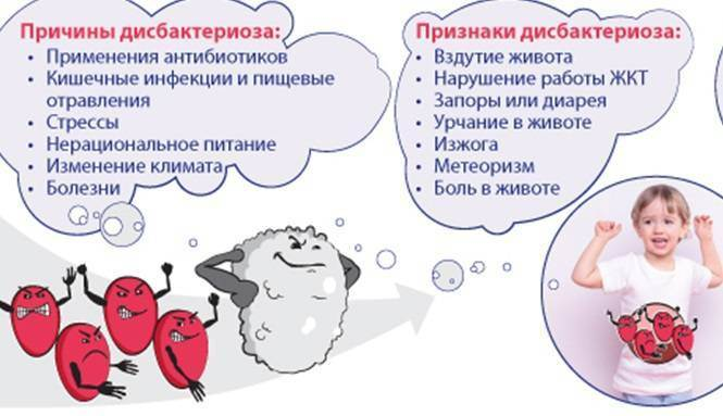 Пробиотики для кошек: принцип действия, инструкция по применению, популярные марки