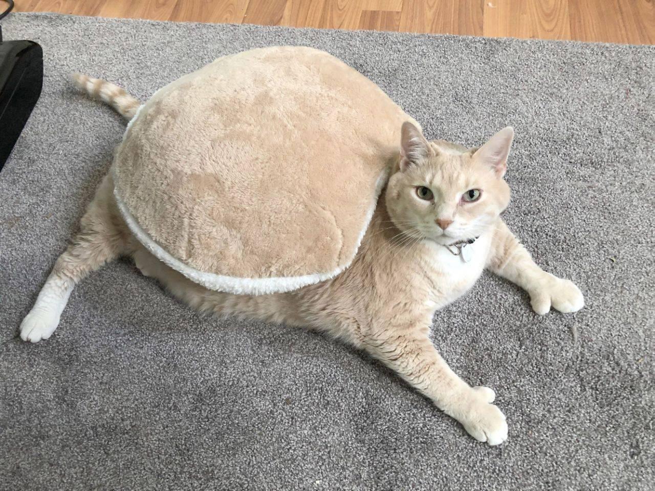 Самые большие коты в мире и их истории