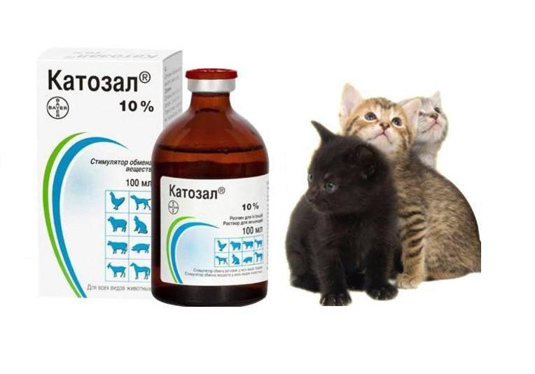 Катозал для кошек: инструкция по применению и отзывы о препарате