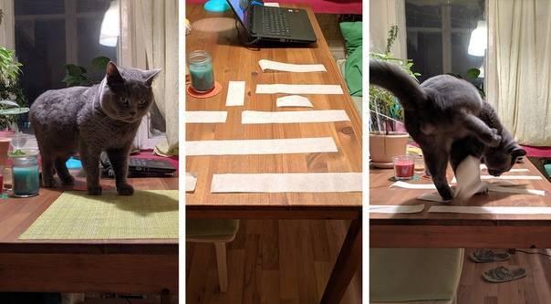 Как отучить кота метить на дверь? - oozoo.ru