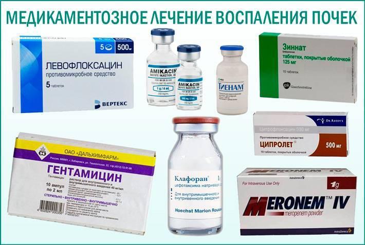 Укол коту антибиотик
