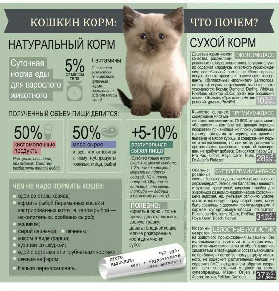 Кормление 3 месячных котят