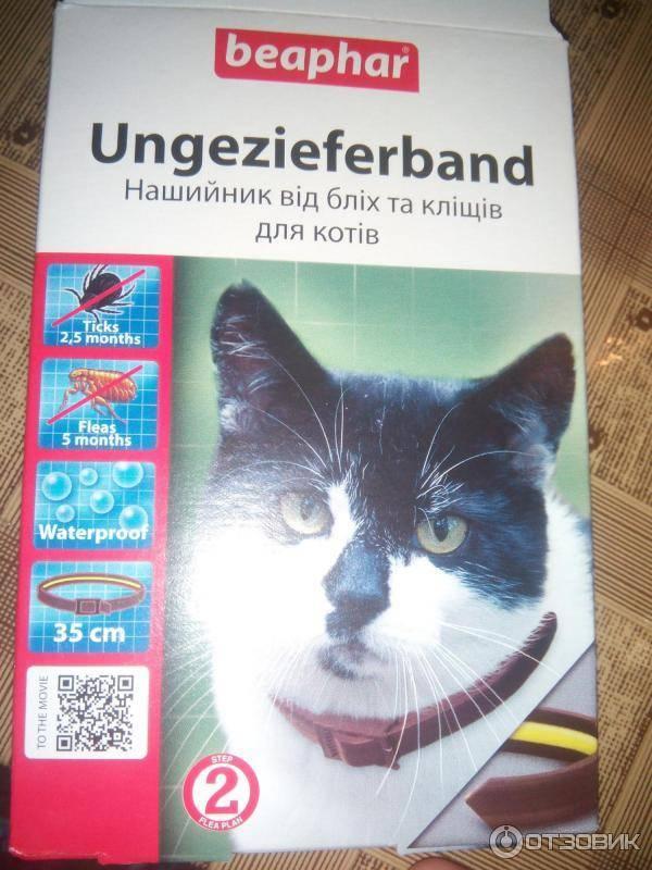 Ошейник от блох для кошек и собак, как он действует, какой лучше выбрать и прочее + отзывы