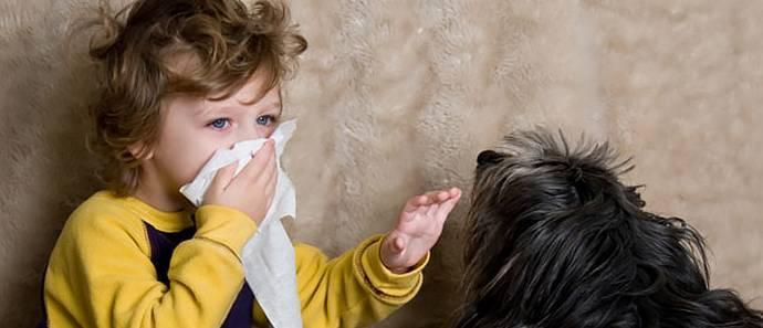 Аллергия на корм у кошек: как выявить и чем лечить