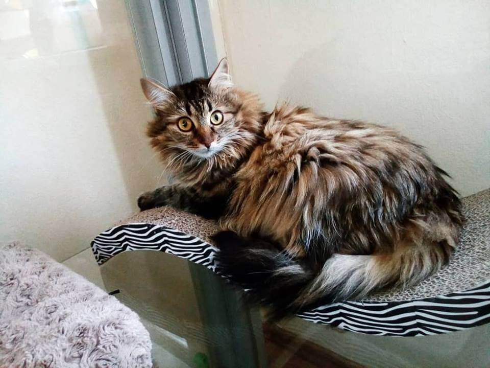 Нужна ли вторая кошка в доме: как ужиться двум животным, критерии выбора питомца