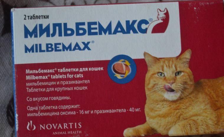 Мильбемакс для кошек и котят от глистов - инструкция по применению