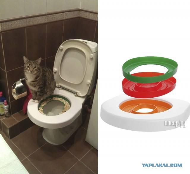 Накладка на унитаз для кошек: разновидности насадок. как приучить кота ходить в унитаз после кошачьего туалета?