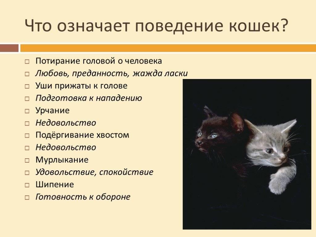 Почему некоторые люди не любят кошек: что это значит