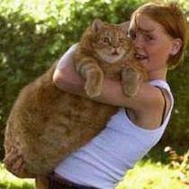 Как заставить похудеть кошку с избыточным весом