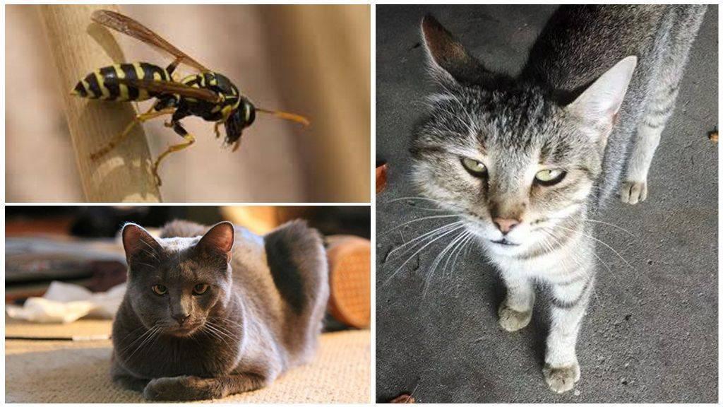 Кошку укусила пчела или оса. что делать?