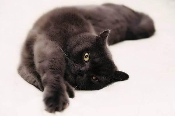 Кастрированный кот и секас