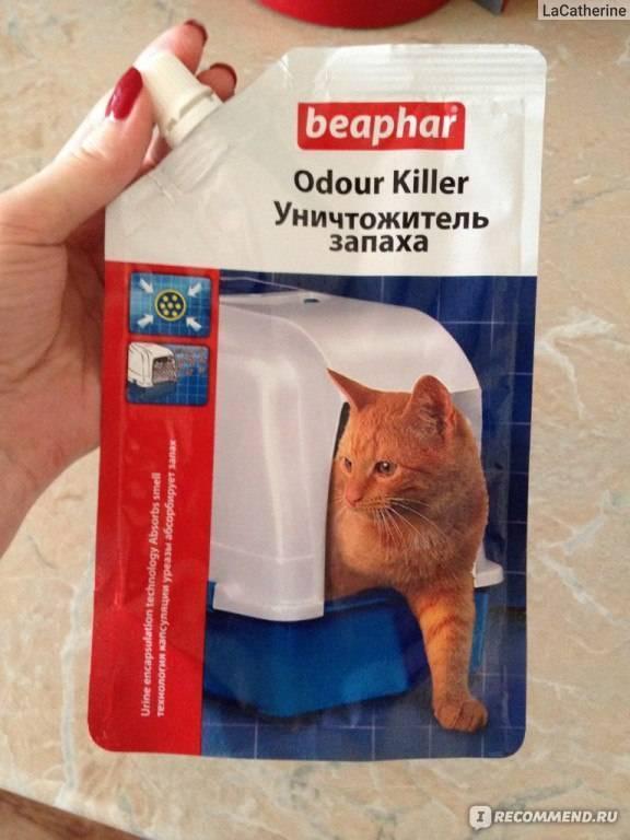 Чем отмыть кошачью мочу: обзор эффективных способов