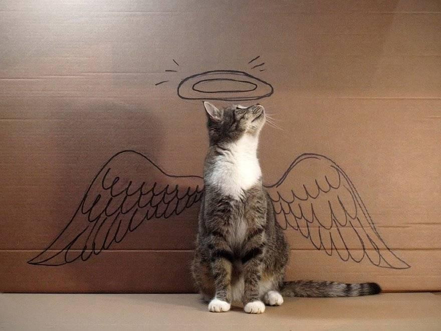 Приметы и суеверия о смерти котов