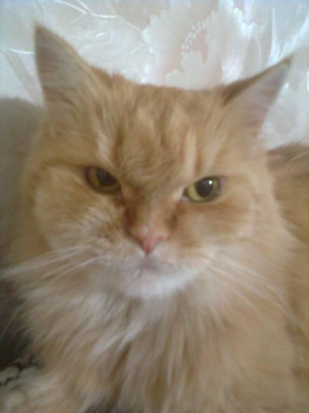 Что делать если у кота опухла щека? - zhivomag
