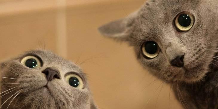 Гипоаллергенные кошки и собаки