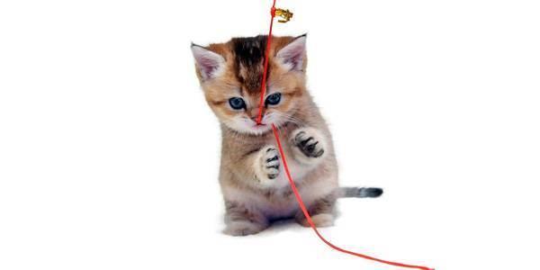 Пожалеть бедняжку? можно ли подбирать котенка на улице согласно приметам