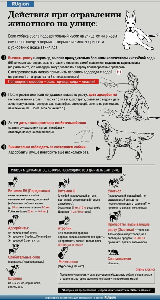 Если отравилась кошка, что делать и как помочь кошке: симптомы