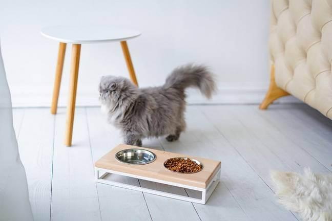 Миски для кошек какие лучше