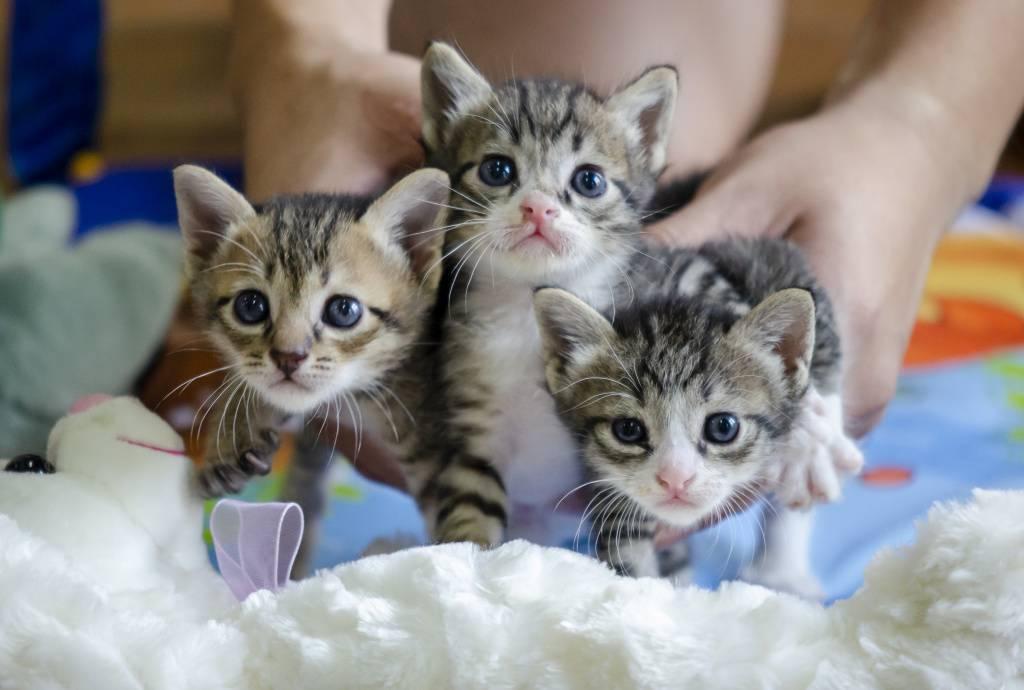 Когда котенка можно забирать от кошки?