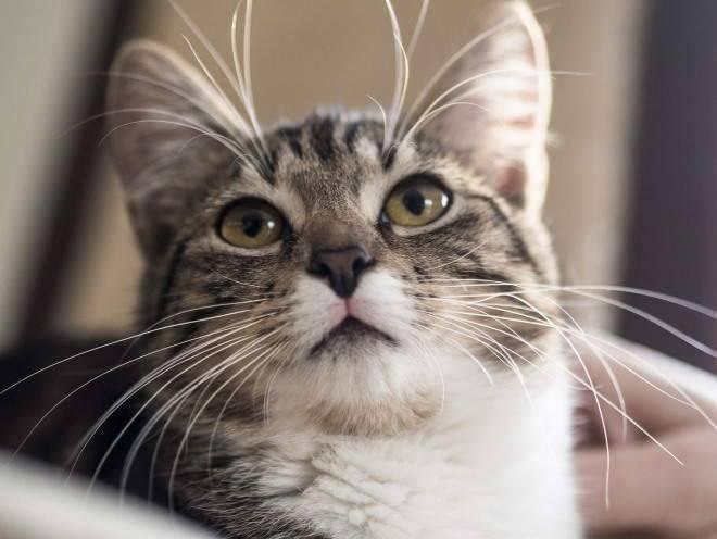 Липидоз печени у кошек: как спасти ослабленное животное. липидоз у кошек - не приговор