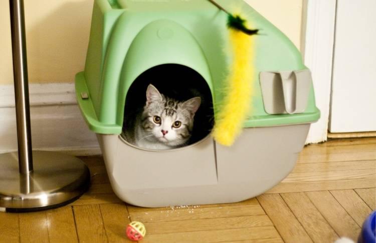 Как пользоваться наполнителем для кошачьего туалета? 16 фото можно ли смывать его в унитаз? как правильно насыпать наполнитель в лоток с решеткой?
