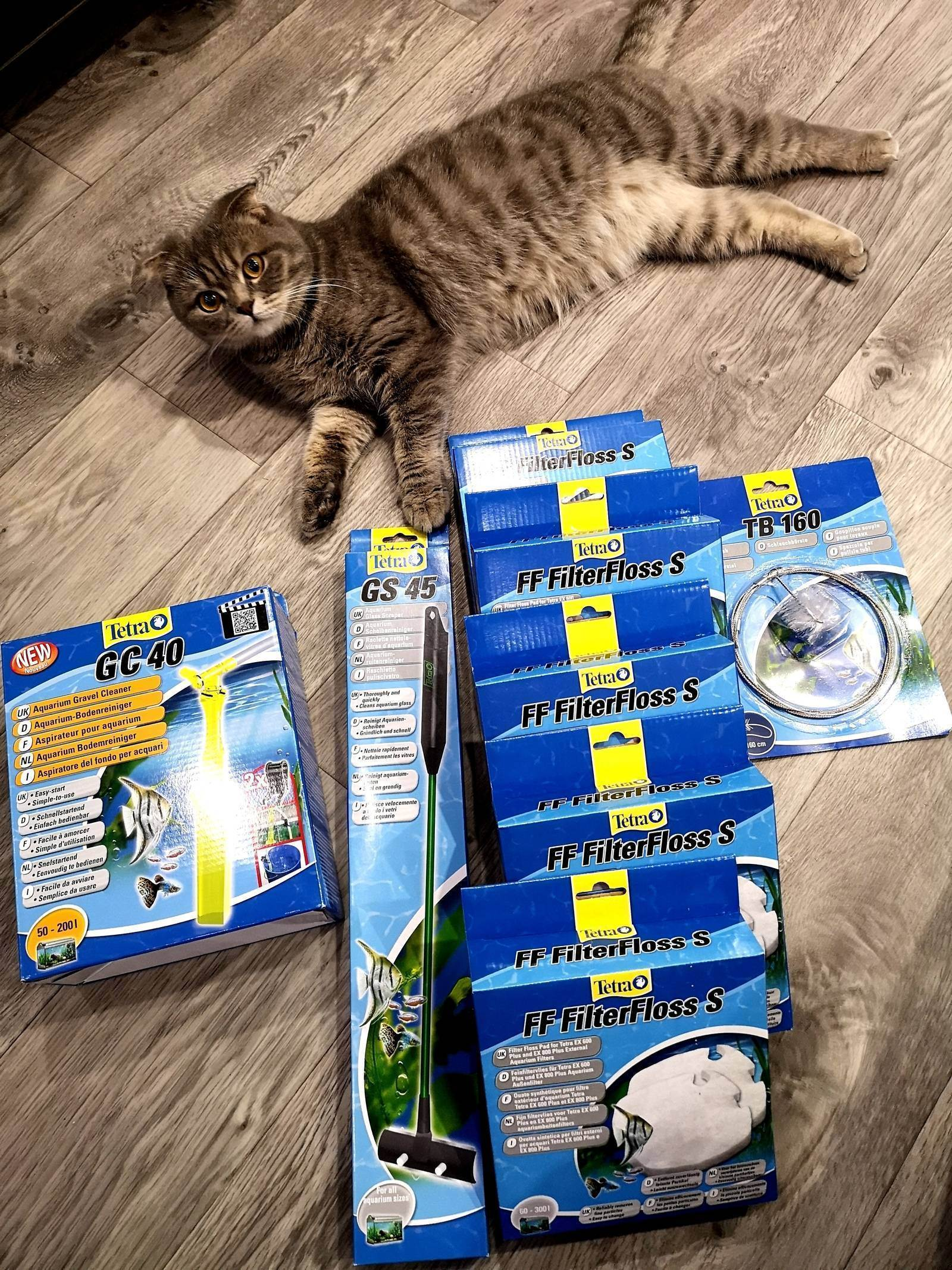 Аквариум для кошек онлайн. видео для кошек на мониторе – развлечение для пушистиков