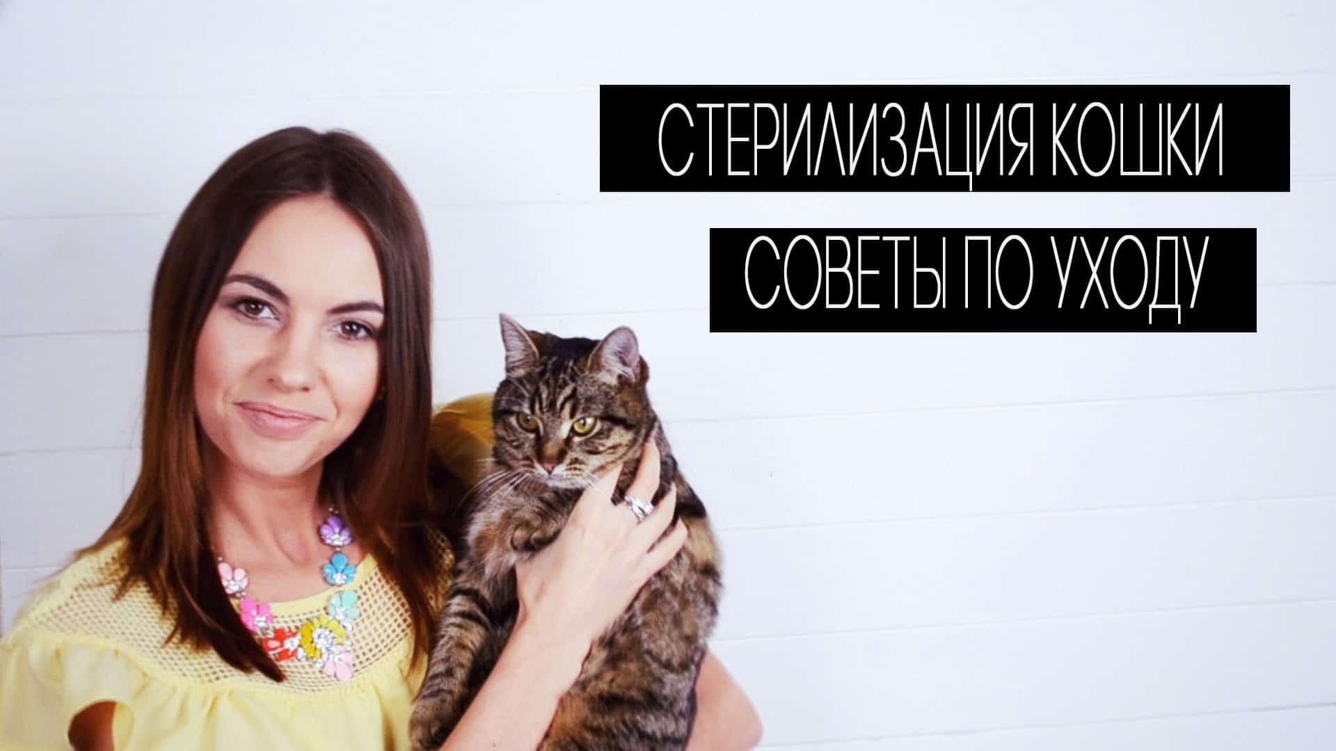 Как подготовить кошку к стерилизации - 5 советов