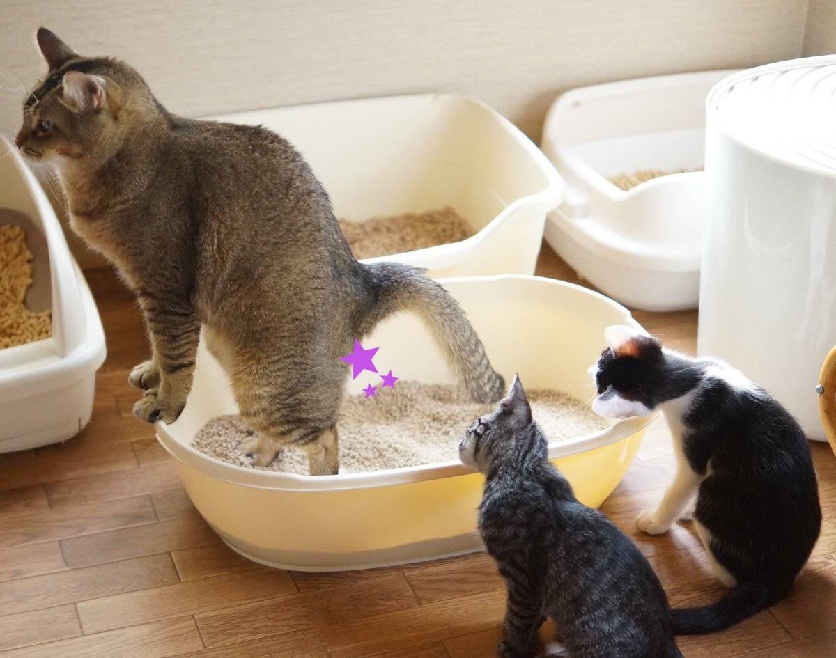 Почему кошка не может сходить в туалет по-маленькому и что делать?