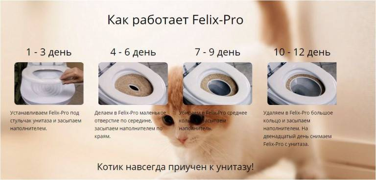 Как приучить кота к унитазу вместо лотка в квартире