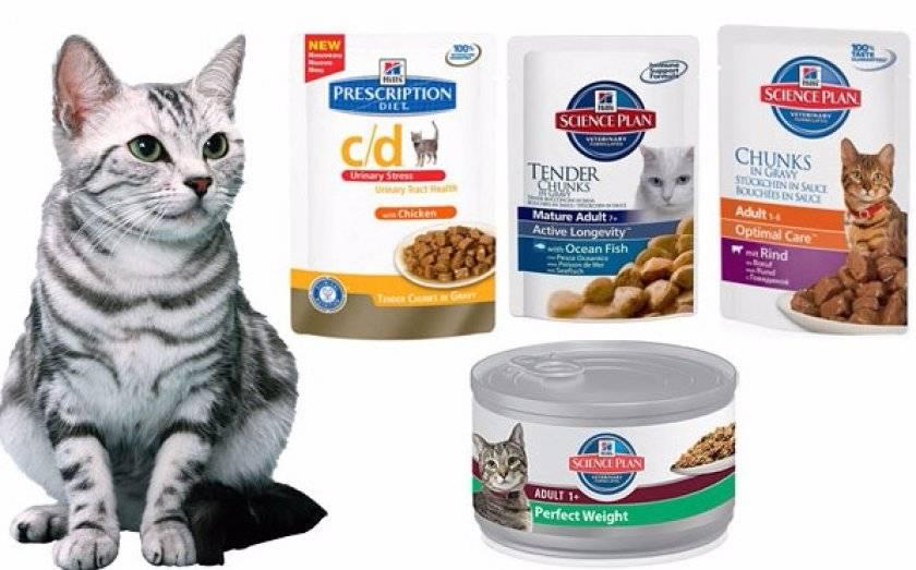 Сухой корм для кошек - какой лучше выбрать