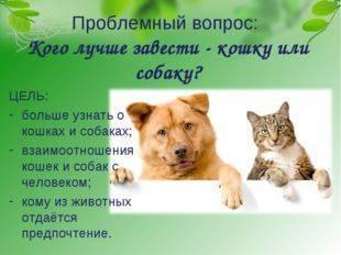 Кошка или собака, кого лучше выбрать фрилансеру?   kadrof.ru