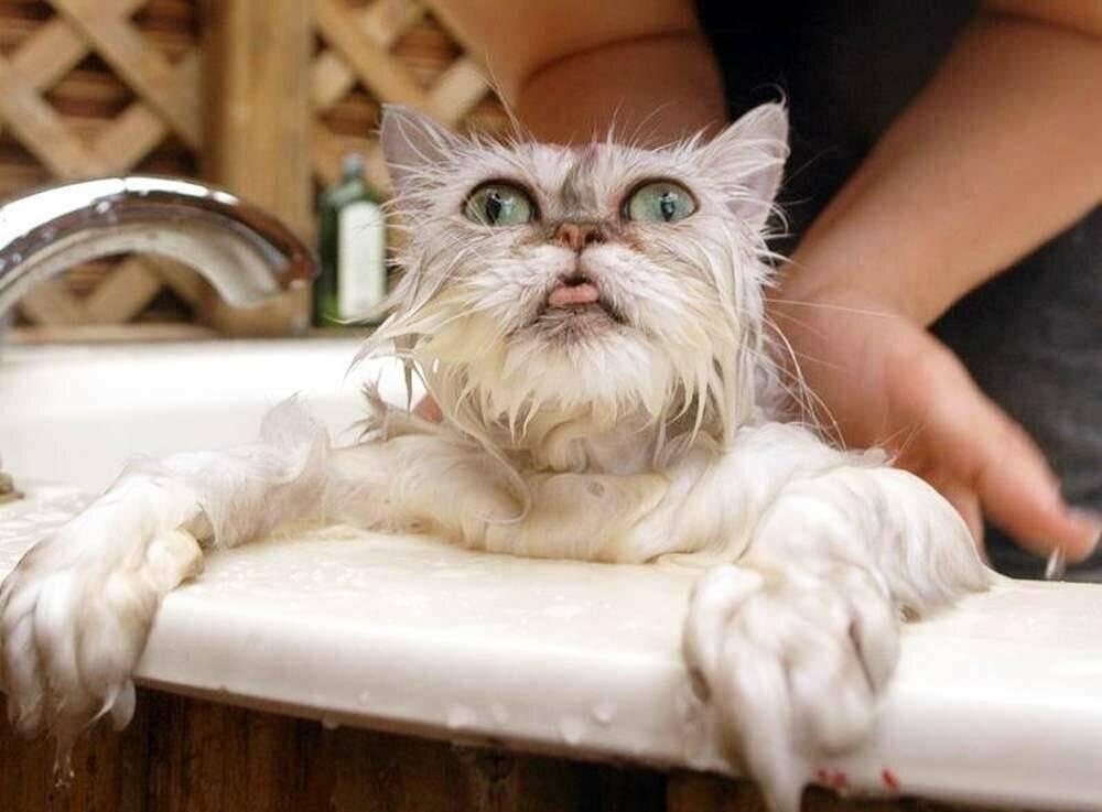 Инструкция: как искупать кошку и не попасть в больницу