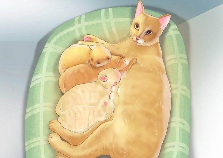 Как проходят первые и последующие роды у кошки