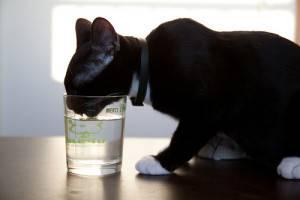 Кот много пьет воды и худеет понос. понос у кошек и котов - новая медицина