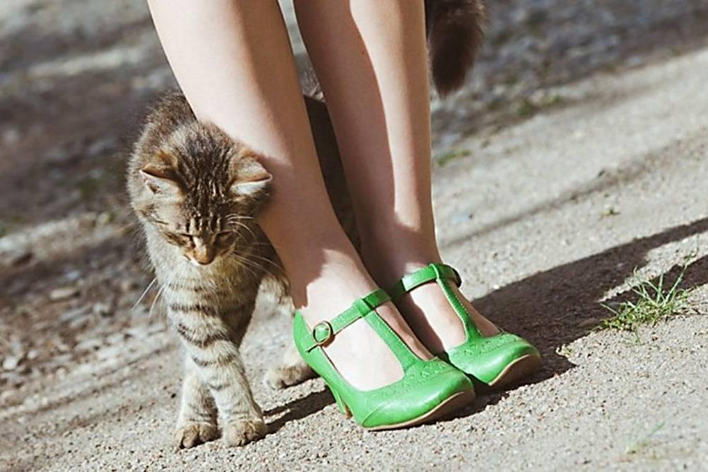 Почему кошки топчут нас лапками? что это массаж или природные инстинкты