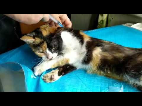 Почему кошка не пьет после стерилизации - oozoo.ru