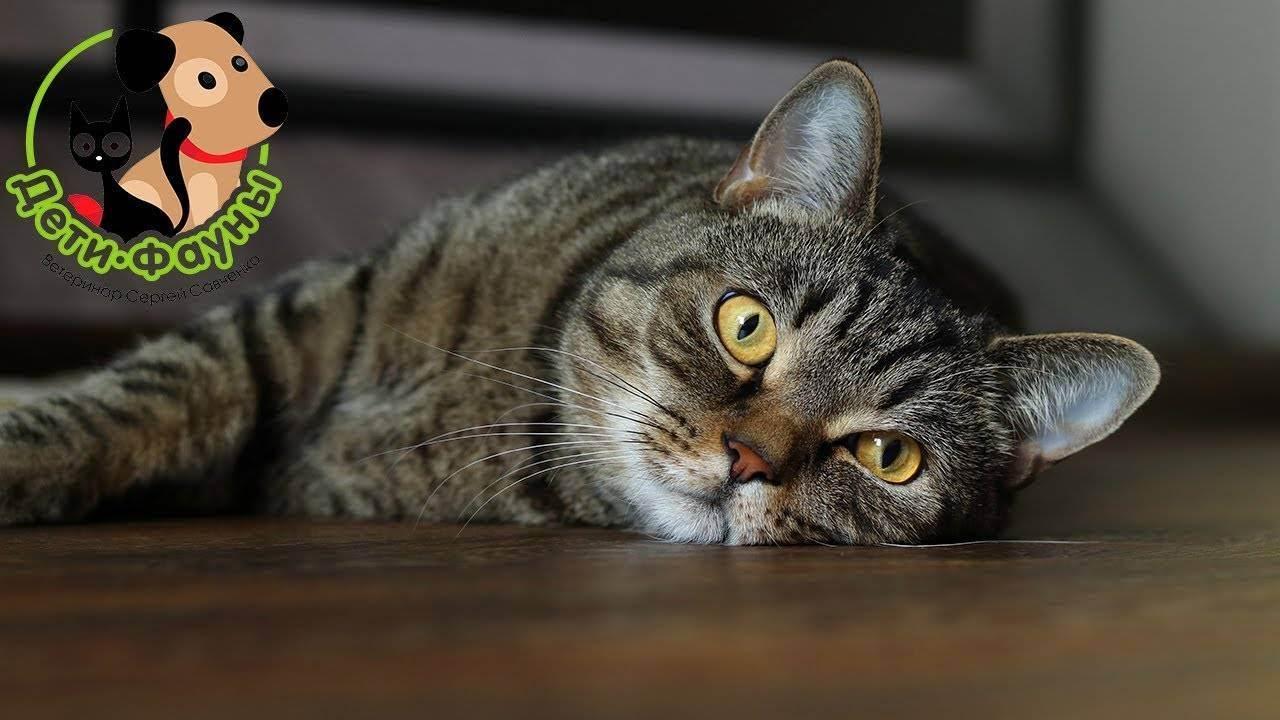 Как помочь кошке в жару: полезные советы