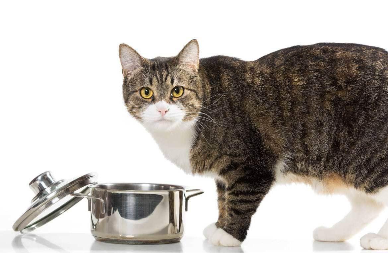 Как помочь кошке при родах и не навредить?