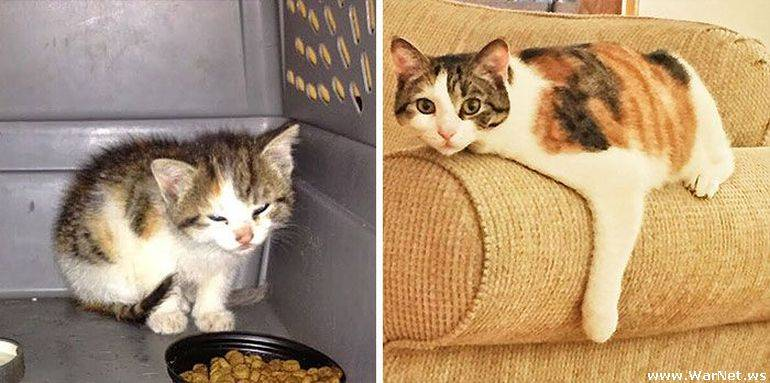 Как обработать котенка с улицы и что нужно сделать первым делом новым хозяевам