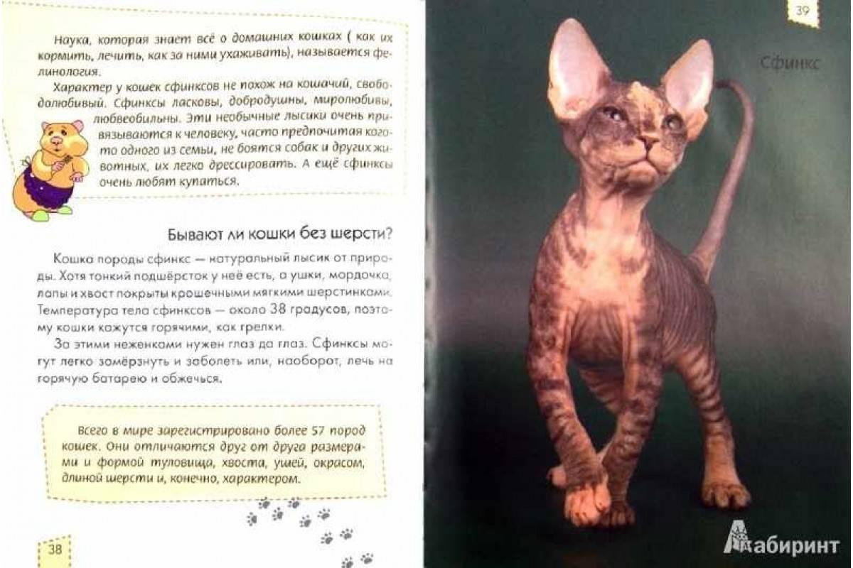 Как мыть сфинкса правильное купание лысых кошек