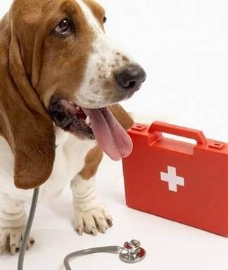 Кошачья ветеринарная аптечка