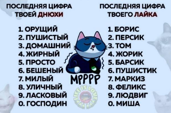 Японские клички для кошек и котов - oozoo.ru