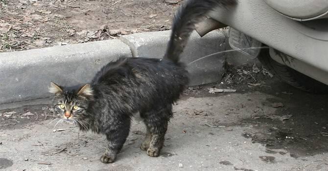 Что делать хозяевам, если кот метит территорию в доме?