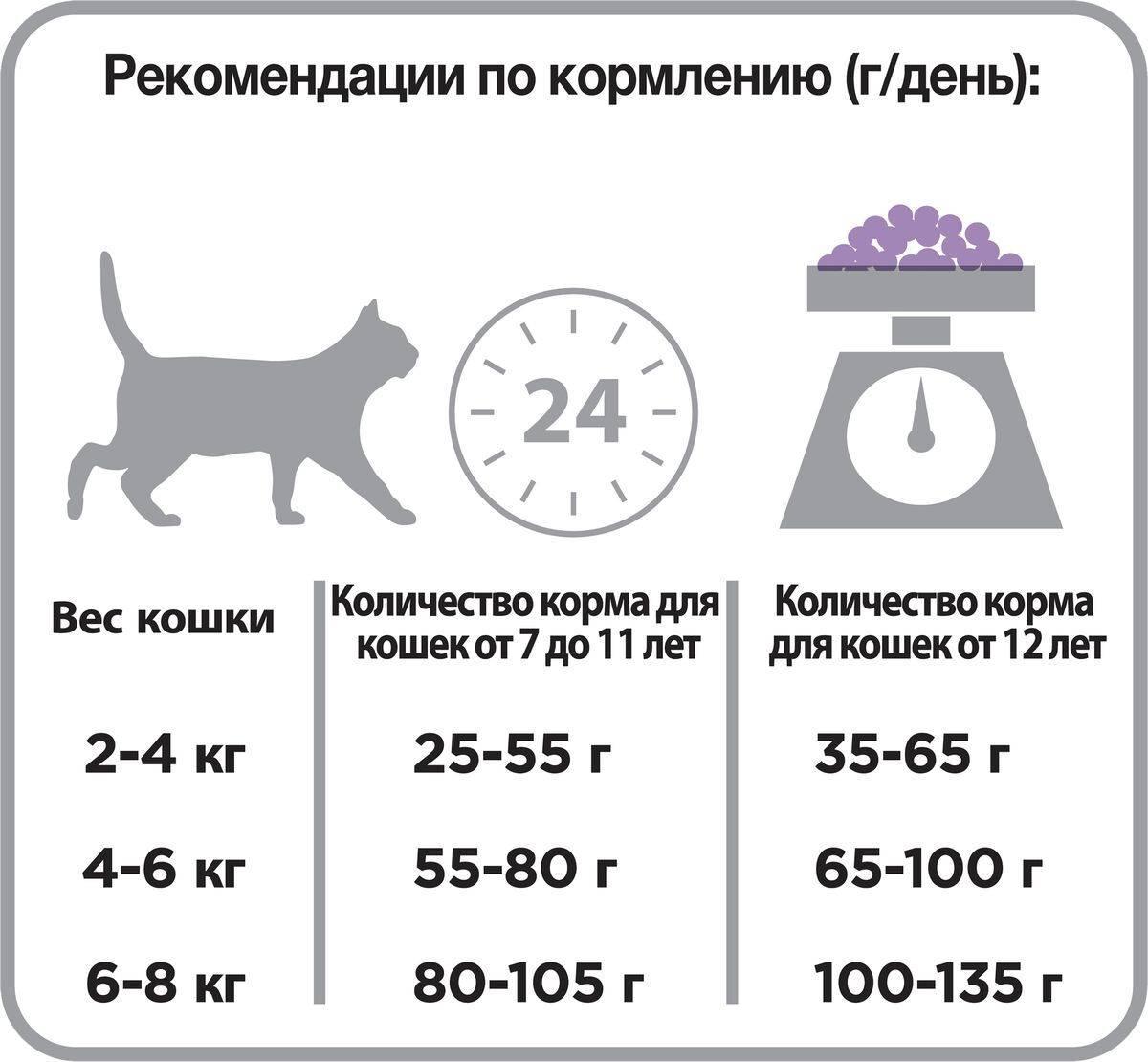 Сколько сухого корма нужно давать кошке в день при разных вариантах кормления
