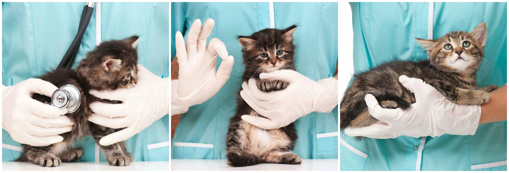 Аллергия у кошек: симптомы и лечение, причины и виды | zoosecrets